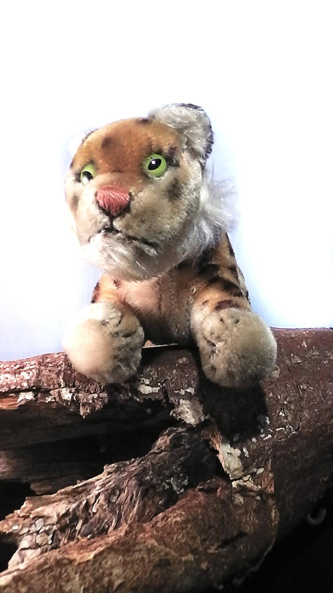 Vintage Steiff Leopard, no flag, tag or button ca. 1960/65, steiff soft toy, steiff animal , wild animal, Leopard, Germany