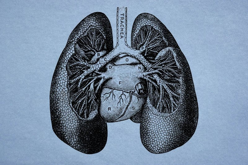 You Need To Know How Weed Helps Keep Your Lungs Healthy