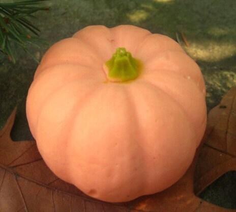 Pampering Pumpkin Soap