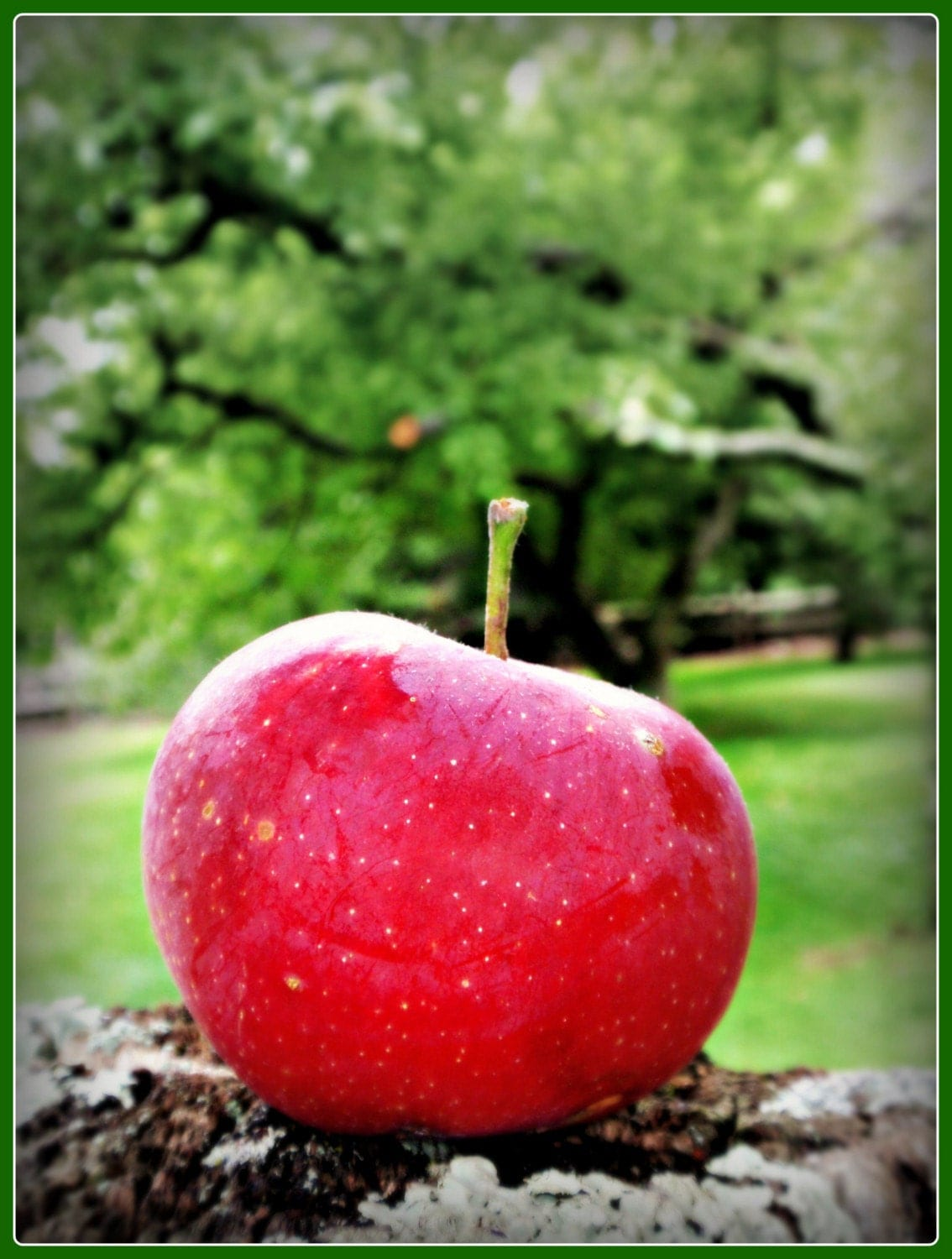 Red Apple Photograph Teacher's Gift