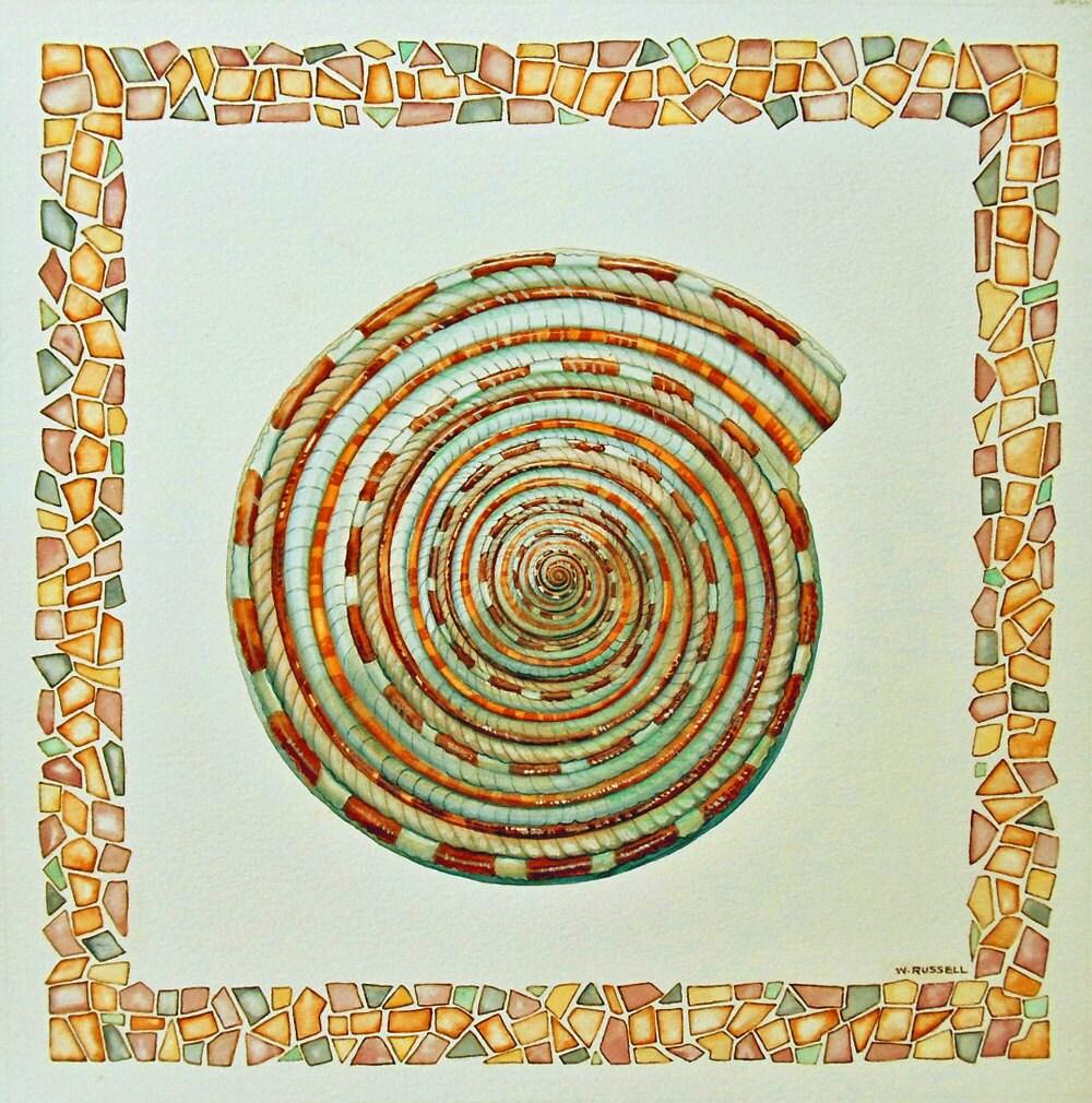Original Watercolor Painting Sundial Shell