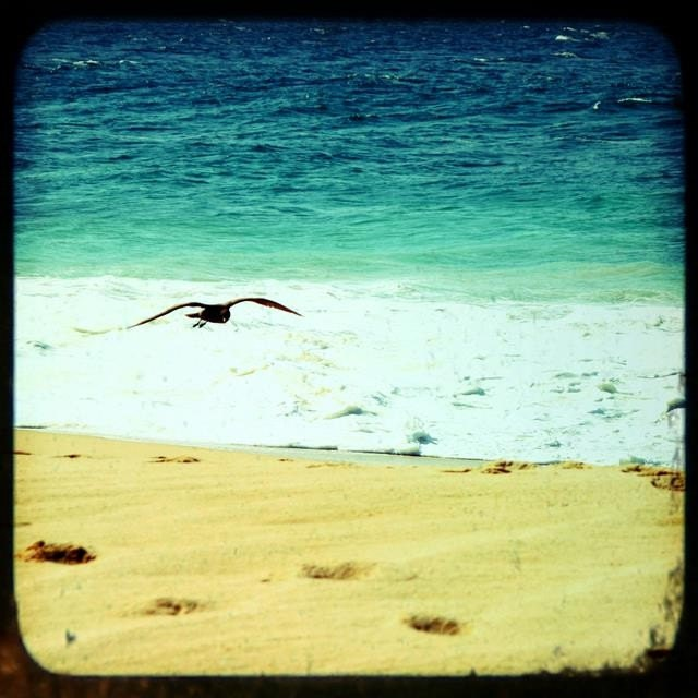 BEACH BLISS - one 8 x 8 fine art photography print (Soaring, Los Cabos, Mexico)