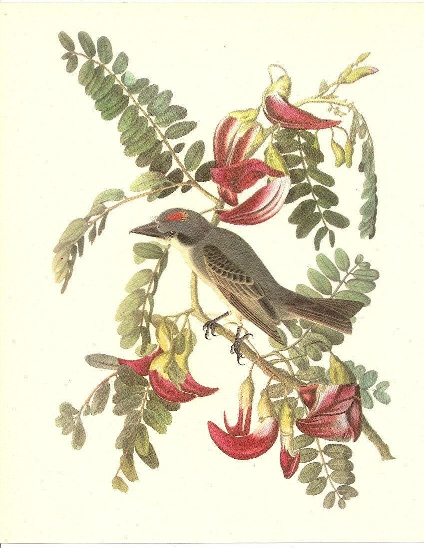 OLD 1937 JOHN JAMES AUDUBON THE BIRDS OF AMERICA BOOK PLATE