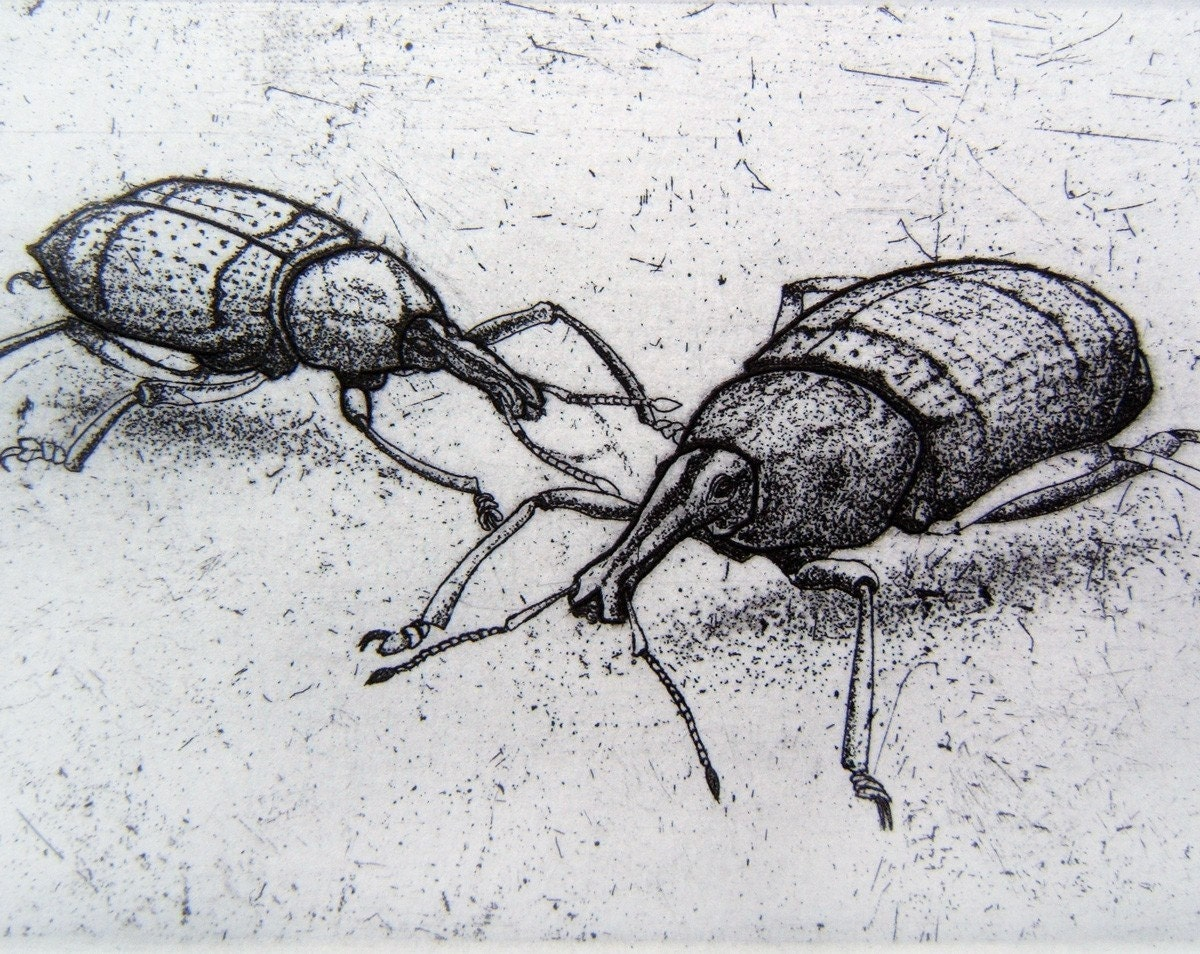 Original Insect Etching