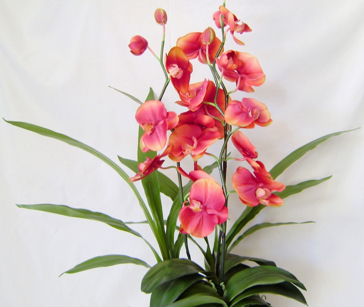 Scented Silk Orchid - Sunset Orange Phalaenopsis