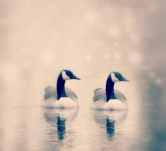 Reflection, Dreamy Fine art Photography, Twins, Wall Decor, ,Soft, Ethereal, Swans, Babies - SevenTen