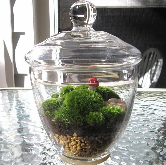 Spring Moss and Rock Garden Terrarium,  GARDEN IN A JAR, Zen Garden,  Great for the HOME or OFFICE
