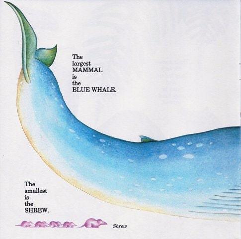 Vintage Print - Animals, Baby Decor, Nursery, Oceanic, Whale, Under the Sea - labiblioteca
