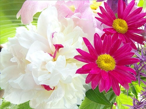 Painted Daisies and Peonies, a  Fine Art Photograph Note Card