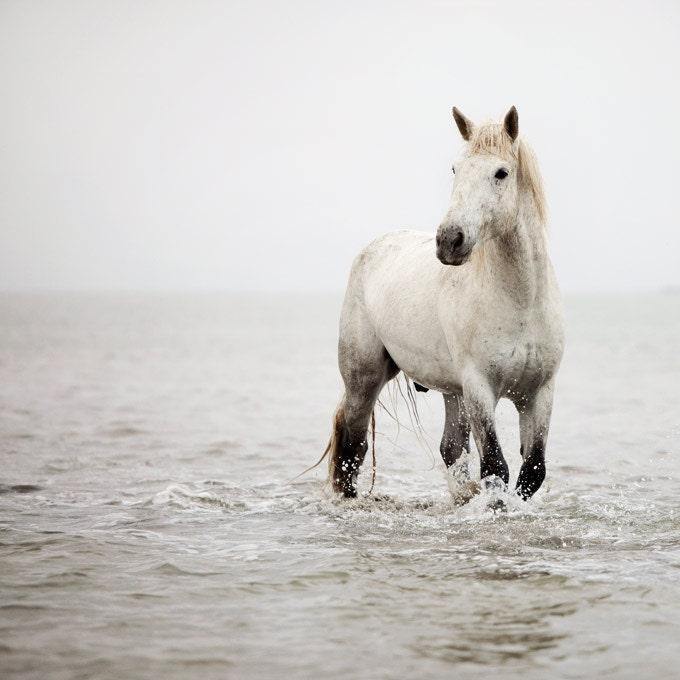 Лошади фото, Белая лошадь в воду, Верховая фотографии, природы, животных - сердце, белый - Камарг Лошадь, Франция