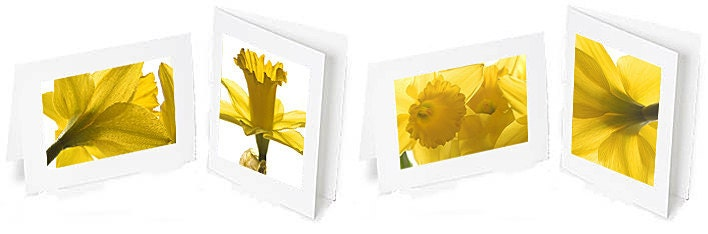 Set of 4 Daffodil photo greeting cards