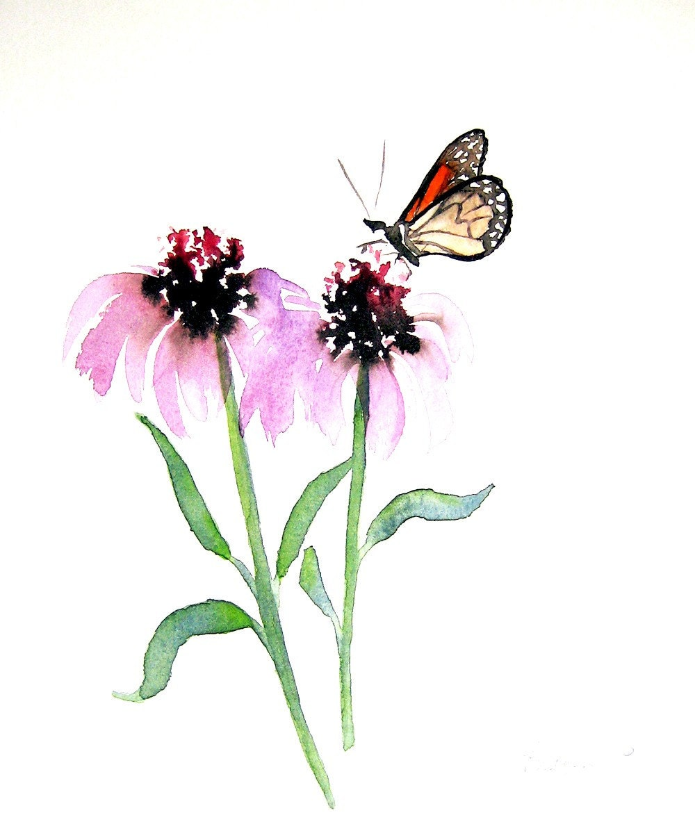 Monarch Butterfly with Echinacea - 5x7 Fine Art Giclee Print