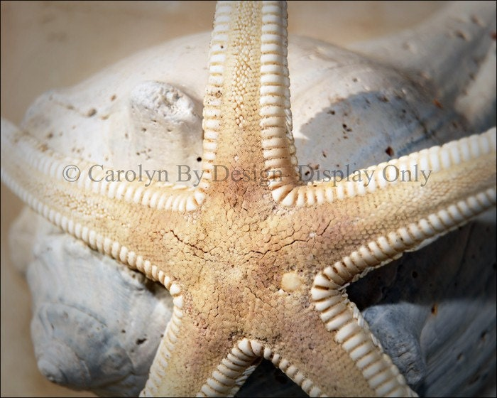Starfish and Baby Conch Shell Macro
