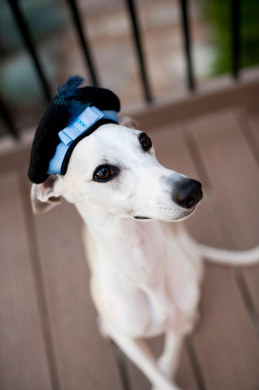 Свадебный блюз собак Берет Hat