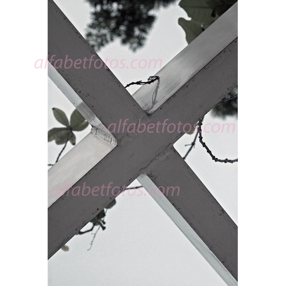 The Letter X in Alphabet Letter Photography 4X6 Individual Single Prints (unframed)