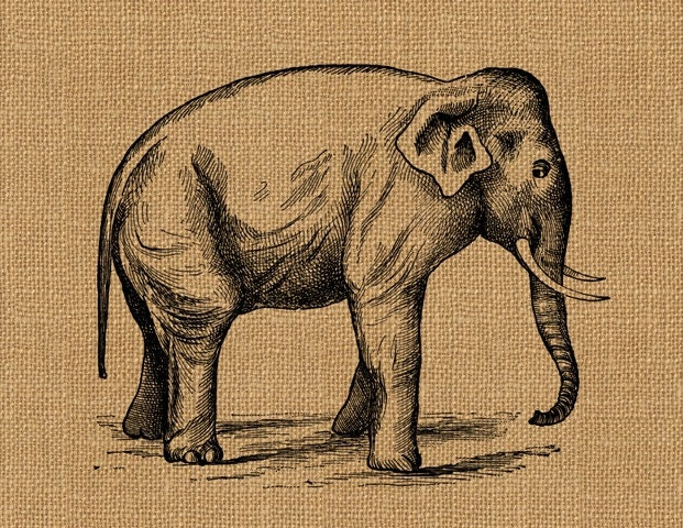 Vintage circus elephant clip art