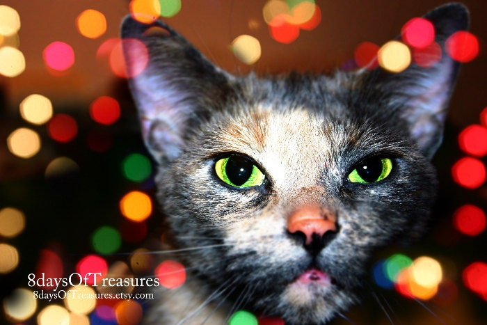 Cat, Christmas,  Winter, Red, Green,  Black, Cat lover,  Bokeh, Dark, Green Eyes,  Kitten - 8daysOfTreasures