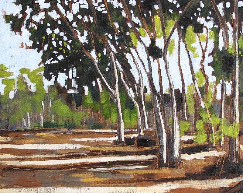San Diego Eucalyptus Trees- Landscape Oil Painting