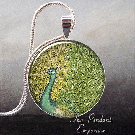 Vintage Peacock Illustration art pendant (62)