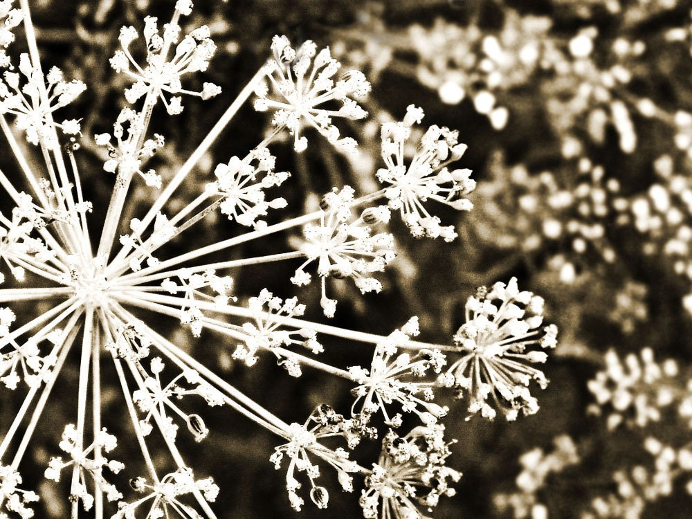 Fine Art Photograph Vintage Snowflake Abstract by Catherine Jeltes as galleryzooart on Etsy from etsy.com