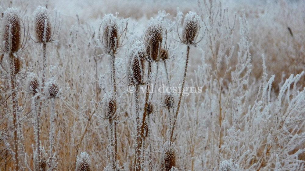Digital Download Foggy Frosty Field 4 Digital Photography Photo Background Digital Background - SoulFILLedExpression