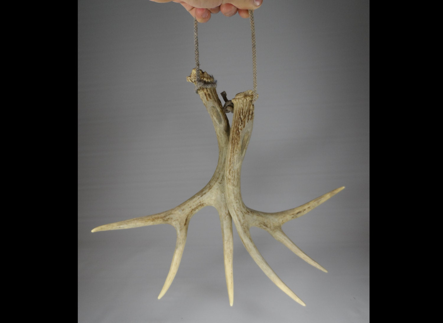 Items Similar To Shed Deer Antler Set For Wall Hanging