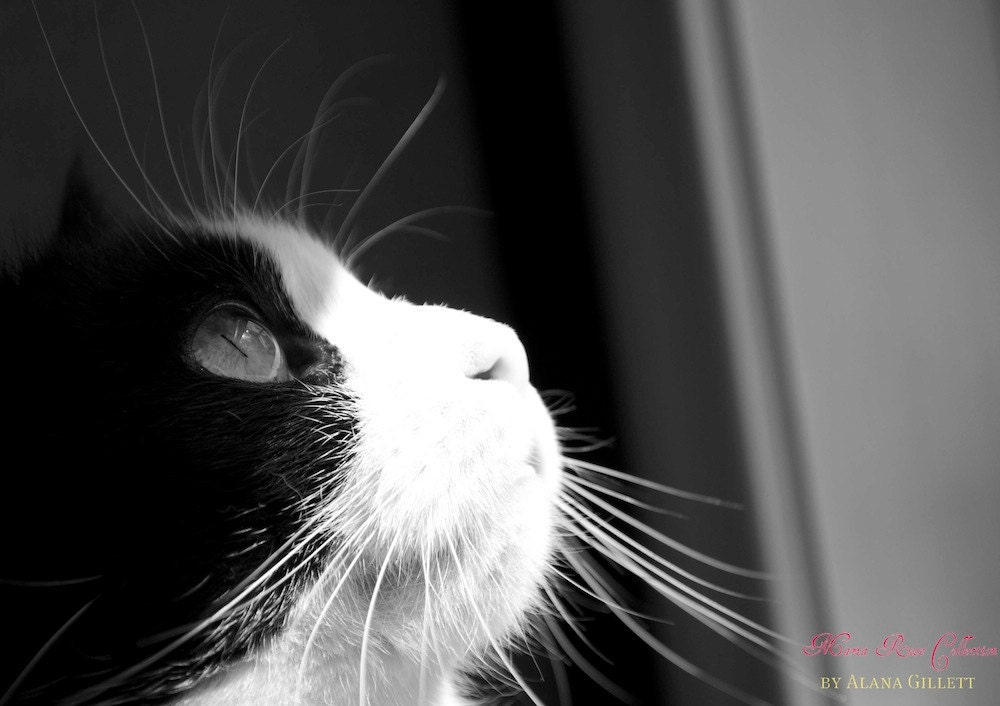 Through a Cat's Eye- Fine Art Photopgraphy print 5x7 by Alana Gillett- Black and White Cat Feline Pet Photography Wall Art Home Decor
