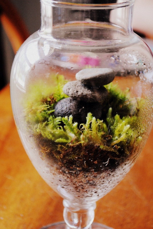 Zen Terrarium : Balanced River Rocks