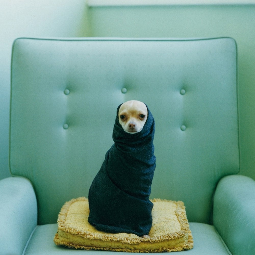 Lucy Snowe Photography
