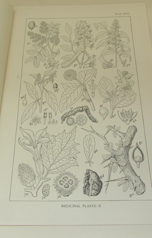 Antique Circa 1900 Print from Equestrian Book  Medicinal Plants II