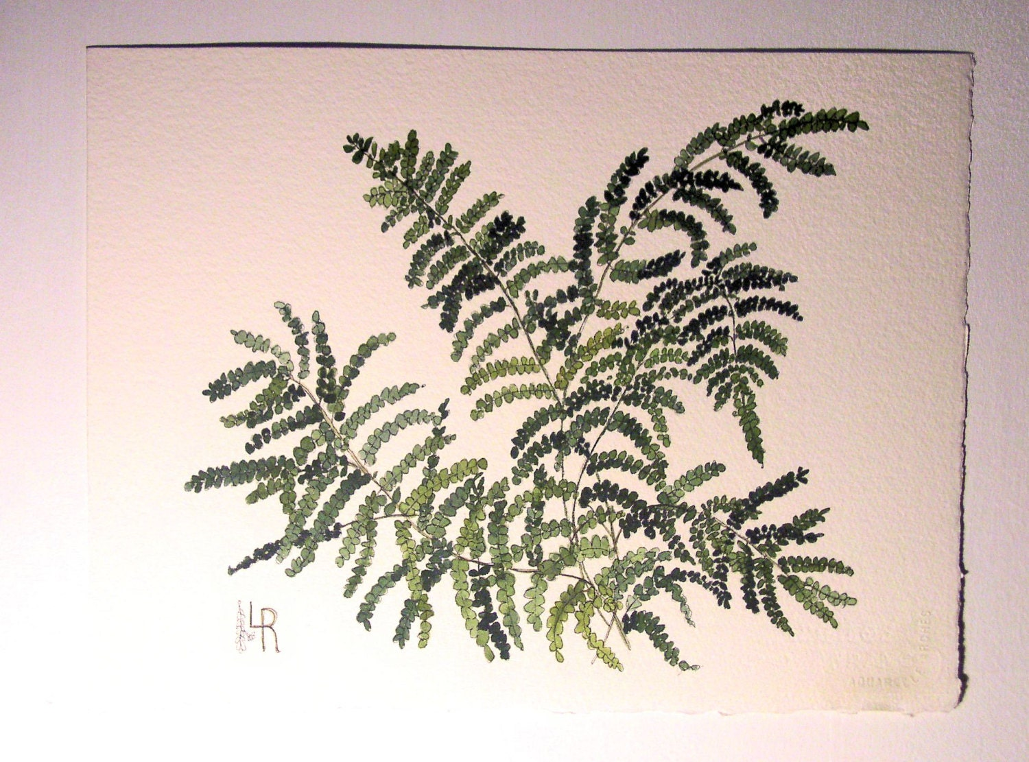 Watercolor Painting Botanical Garden Woodland Fern Illustration Artwork by Laurie Rohner