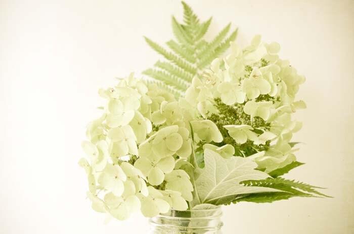 Vintage White.  Белый гортензии цветки бледно-зеленый папоротник мудрец букет потертый шик простоты ботанический исчезла деревенская фотография 8x10