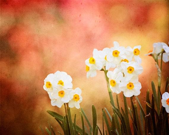 "Flower Photography, red rust white yellow orange rustic nature photo print floral wall art green, 11x14, 8x10 Photograph, ""Joyfully Adorned"" - CarolynCochrane"