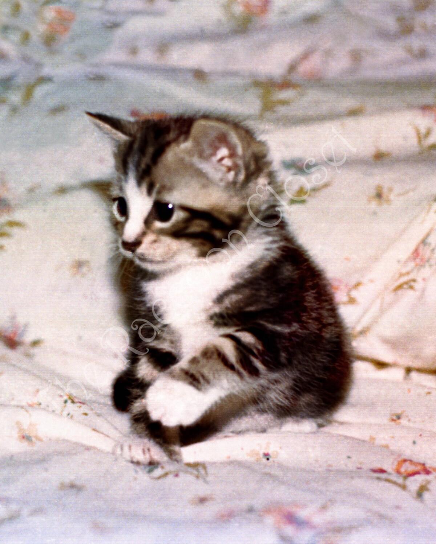 Soft Kitty - theraccooncloset