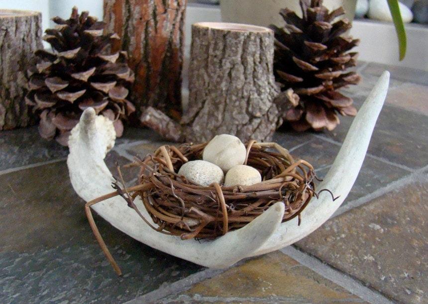 Bird Nest Deer Antler Arrangement Home Decor By