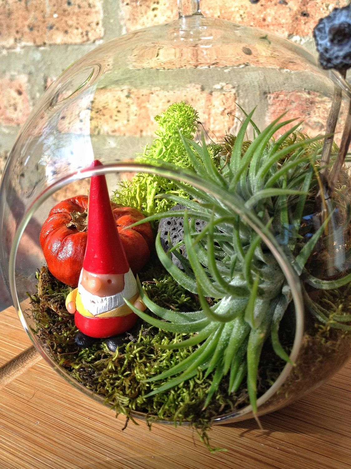 Gnome and Air Plant Moss Terrarium - A Perfect Birthday Gift