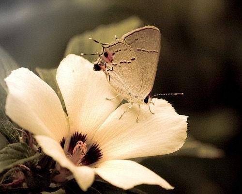 Good Morning Sweet Friend 8x10 Fine Art Print Butterfly