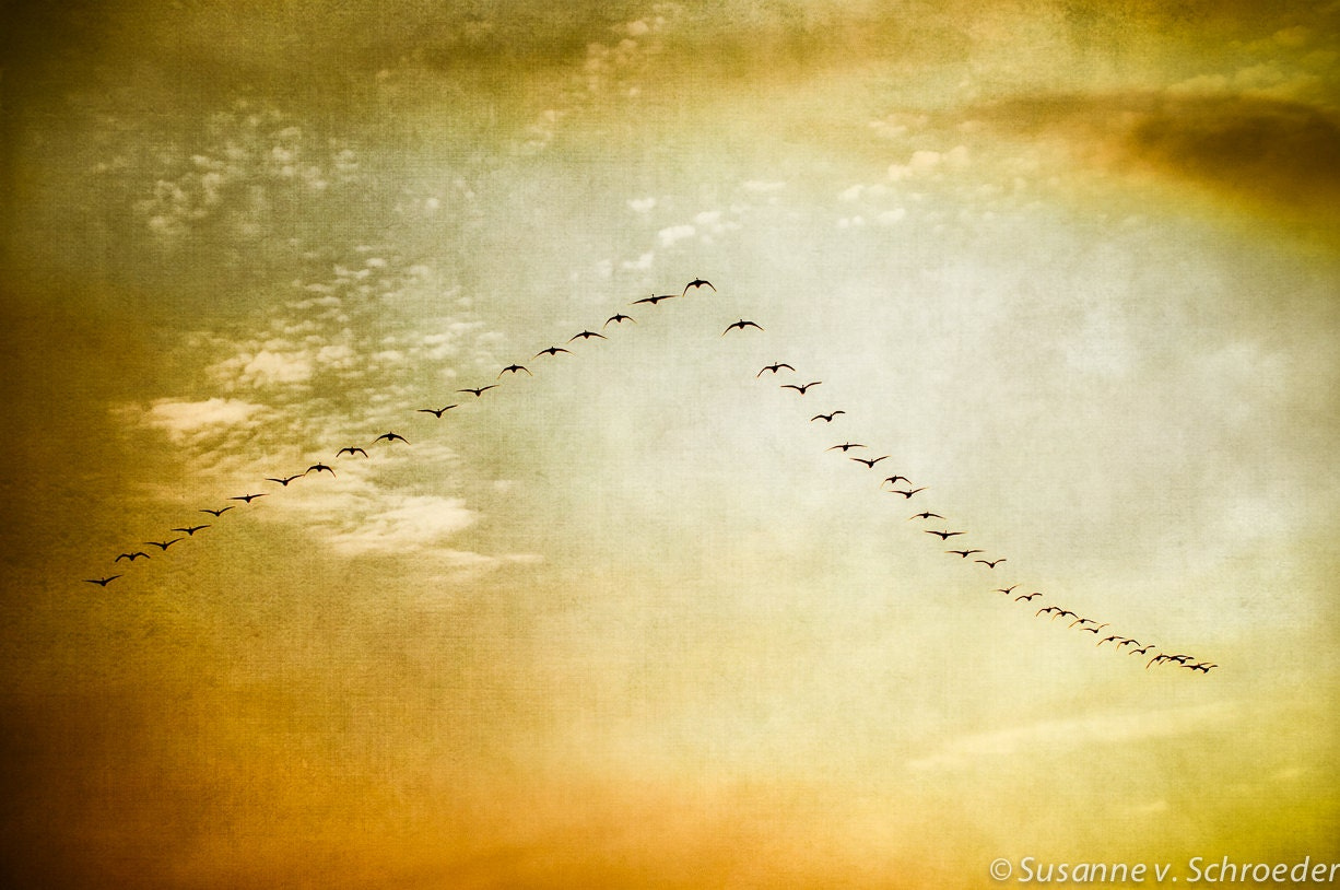 CIJ SALE, Nature Photography, Geese in Sky, Birds in Flight, Fine Art Print, Golden Sunset Colors, Warm Spring Tones, Springtime, Wall Decor - SoulCenteredPhotoart