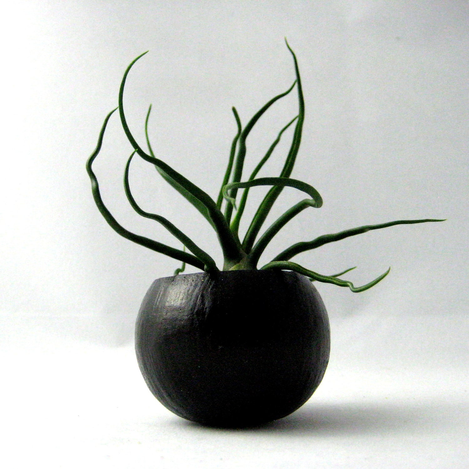 Mini Bulbosa Air Plant Container Pod - Black // Home and Garden // Planter // Gifts under 20 - seaandasters