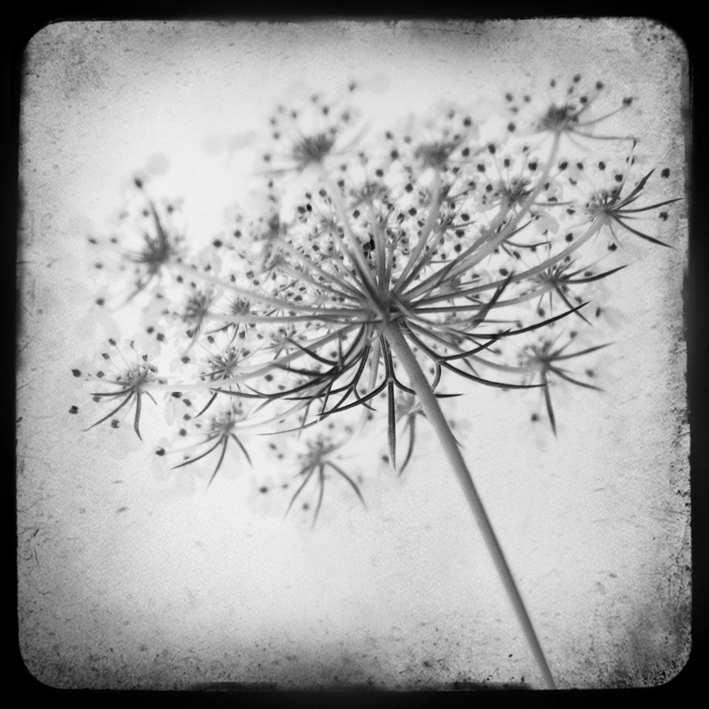 LACE 8x8 fine art photo