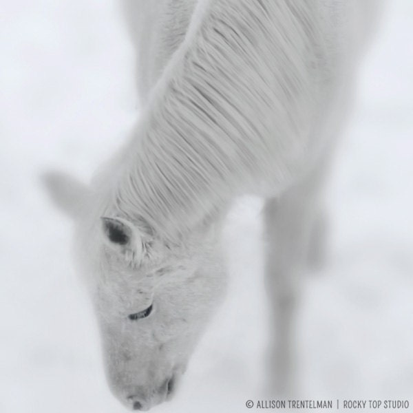 White Horse Photo, Black and White Horse Photography, Horse Photograph, Horse Art Print, Horse Print, Winter Snow Photo, Winter Art - RockyTopPrintShop