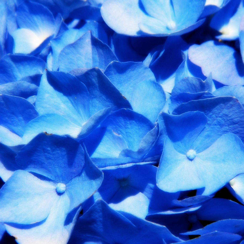 Flower photo - blue bouquet - feminine - shabby chic 5x5 print, gift for her