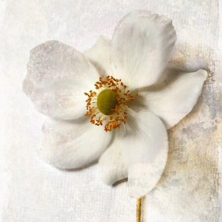Ветер цветок (4x4 дюйм холст мини)