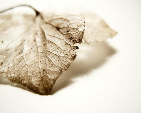 Rustic Lace . Fine Art Photograph . dried flower photograph . beige. tan. neutral. natural . white. 8x10 - GrainnePhotography