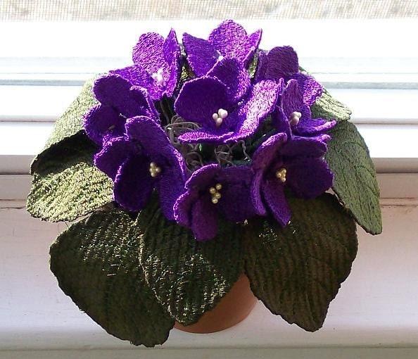 African Violets - UNIQUE