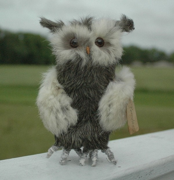 Romulous the Owl