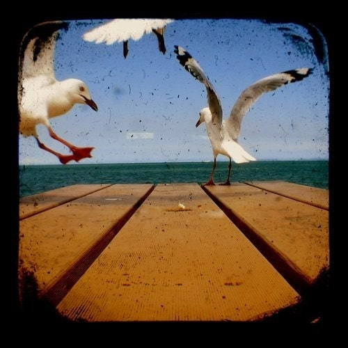 TTV Seagulls Birds 2 Photography Print 4 x 4