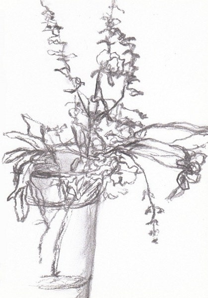 Dying Roses - drawing in vine charcoal
