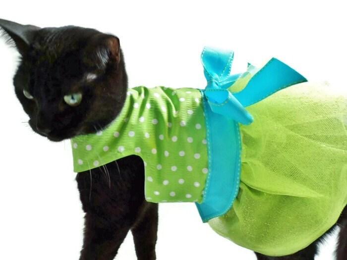 Костюм для котёнка своими руками 678