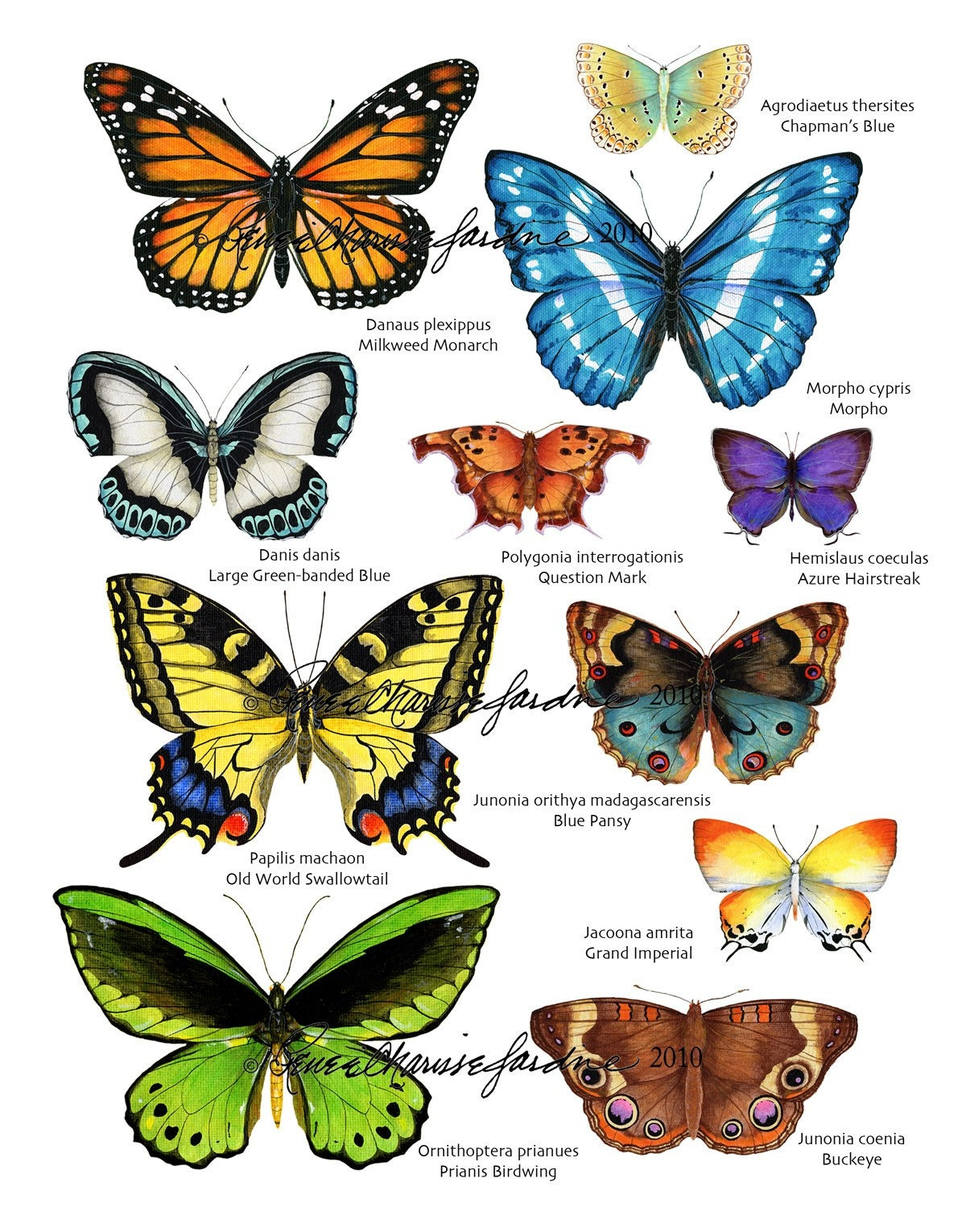 Types Of Pictures And Names With Butterflies Pictures to ...